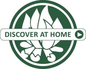 discover-at-home-graphic